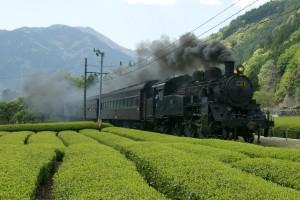 木々生い茂る山とお茶畑の間を大井川鉄道のSLが走る=川根本町商工観光課提供